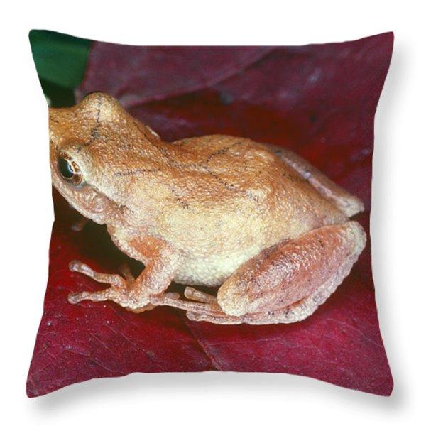 Spring Peeper Throw Pillow by Millard H. Sharp