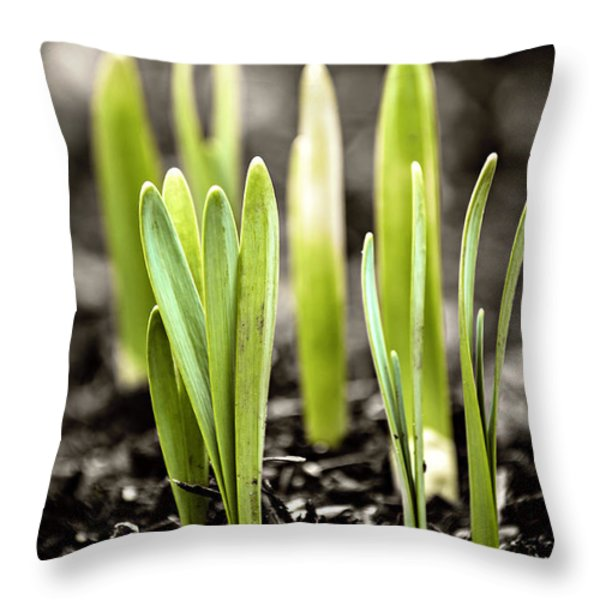 Spring shoots Throw Pillow by Elena Elisseeva