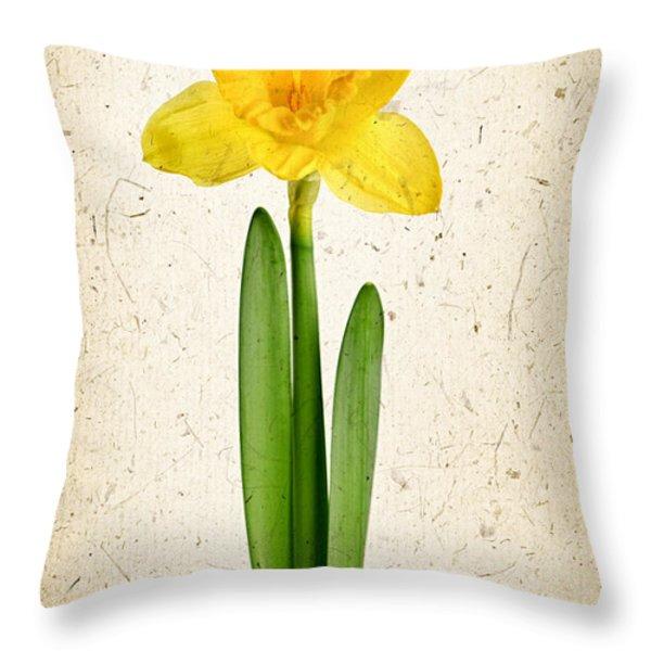 Spring Yellow Daffodil Throw Pillow by Elena Elisseeva