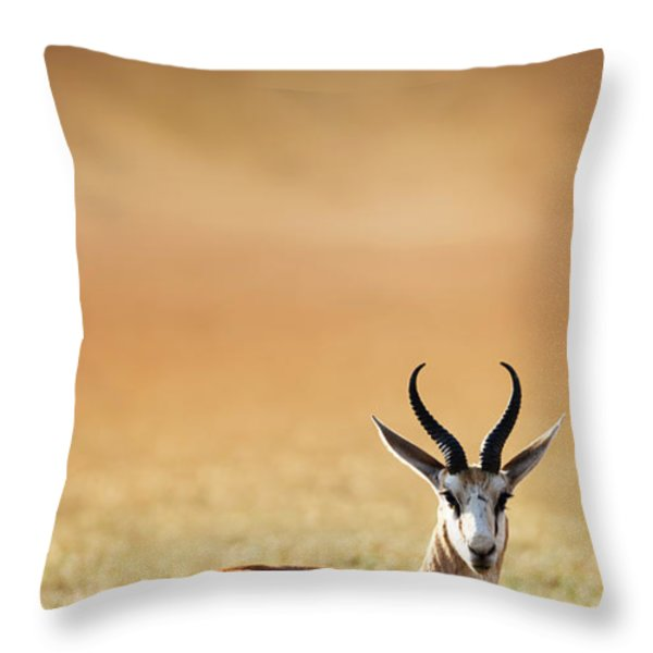 Springbok Resting On Green Desert Grass Throw Pillow by Johan Swanepoel