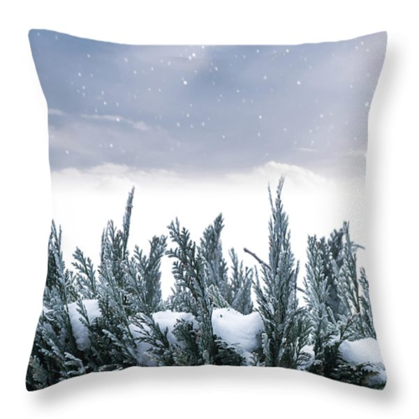 Spruce In Snow Throw Pillow by Wim Lanclus