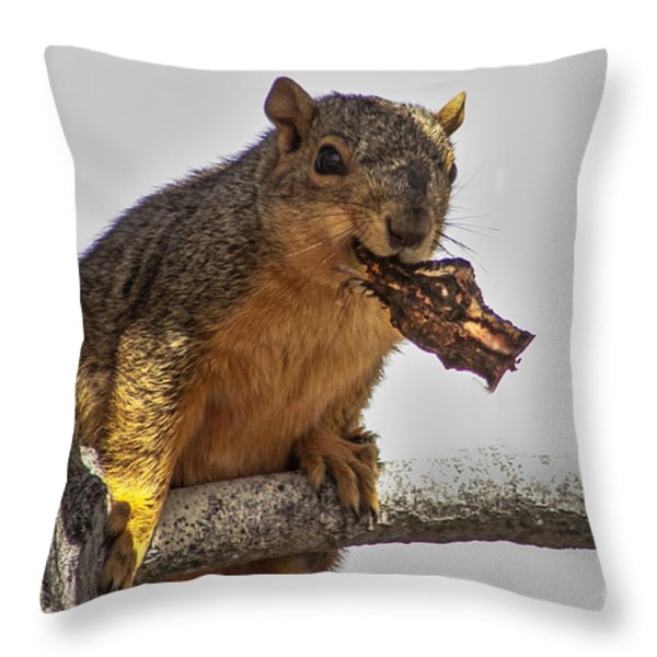 Squirrel Lunch Time Throw Pillow by Robert Bales