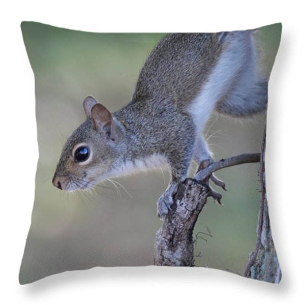 Squirrel Pose Throw Pillow by Deborah Benoit