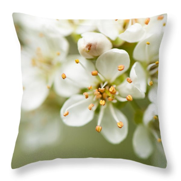St Lucie Cherry Blossom Throw Pillow by Anne Gilbert