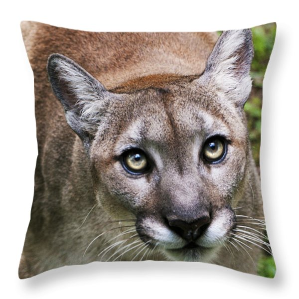 Stalking Cougar Throw Pillow by Donna Proctor