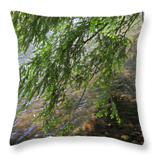 Stalking Trout Throw Pillow by John Stephens