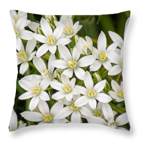 Star of Bethlehem Throw Pillow by Bill Pevlor
