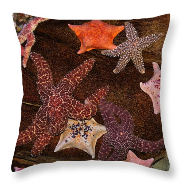 Starfish Variety 5D24133 Throw Pillow by Wingsdomain Art and Photography