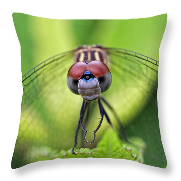 Staring Contest Throw Pillow by Juergen Roth