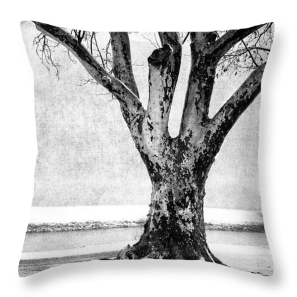 Stately Throw Pillow by Betty LaRue