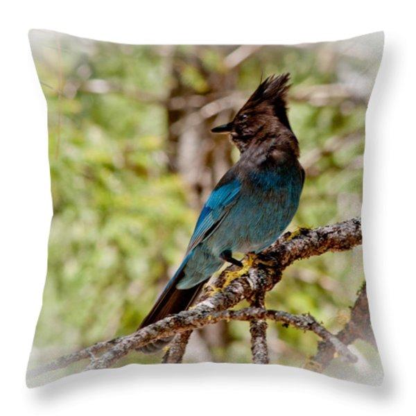 Stellar Jay Throw Pillow by Bill Gallagher