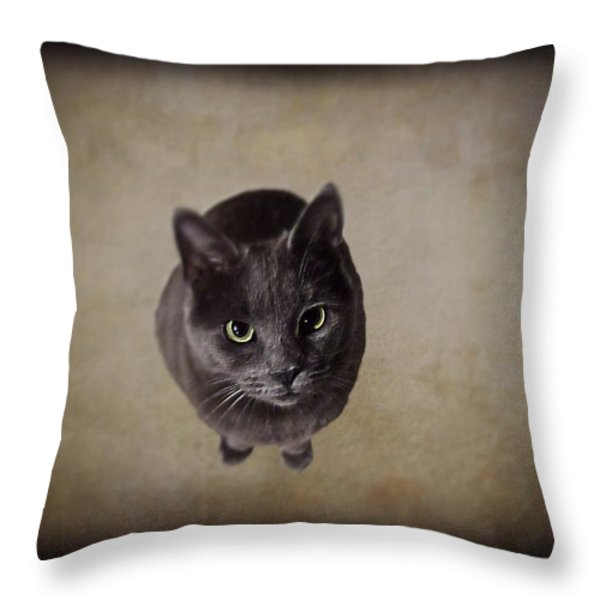 Sterling The Cat Throw Pillow by David Dehner
