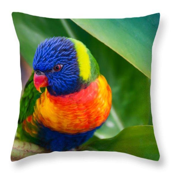 Striking Rainbow Lorakeet Throw Pillow by Penny Lisowski