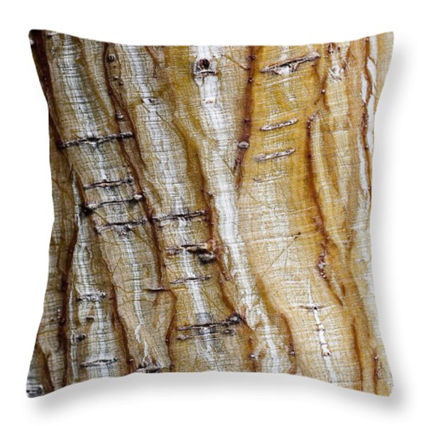 Striped maple Throw Pillow by Steven Ralser