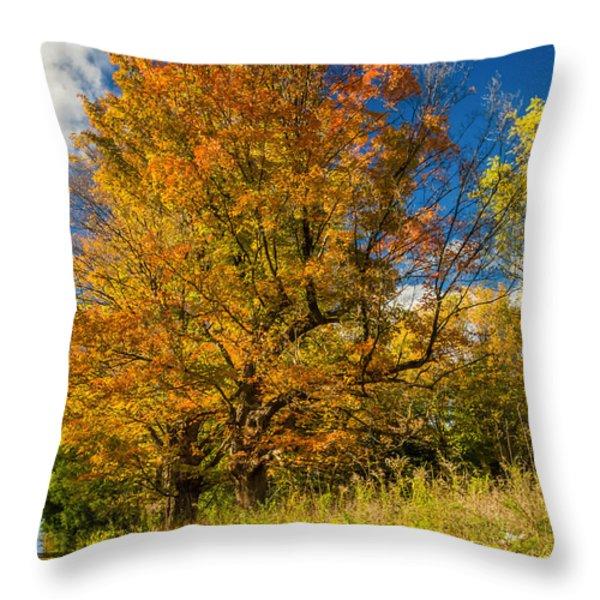 Sugar Maple 3 Throw Pillow by Steve Harrington