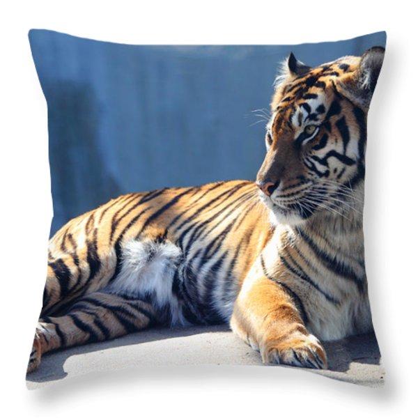 Sumatran Tiger 7D27276 Throw Pillow by Wingsdomain Art and Photography