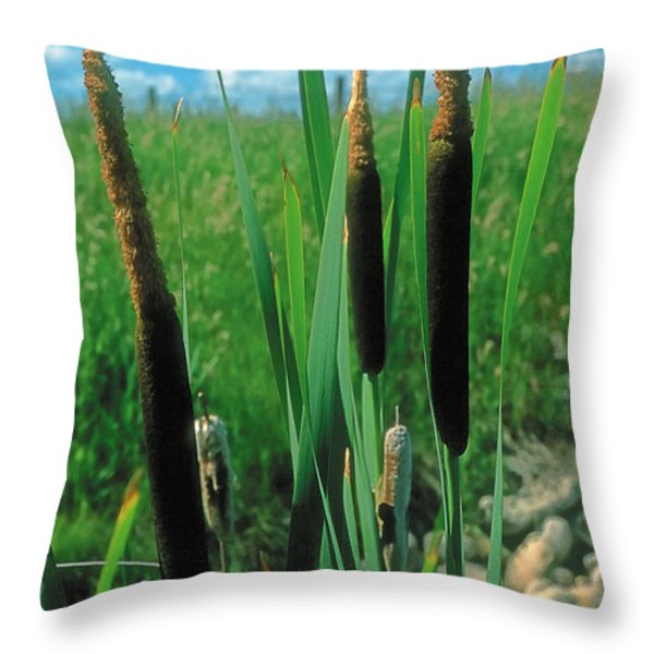 Summer 2 Throw Pillow by Terry Reynoldson