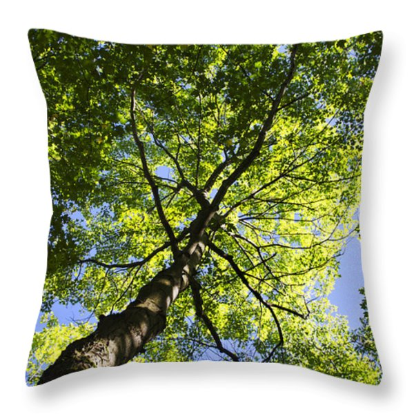 Summer Tree Canopy Landscape Throw Pillow by Christina Rollo