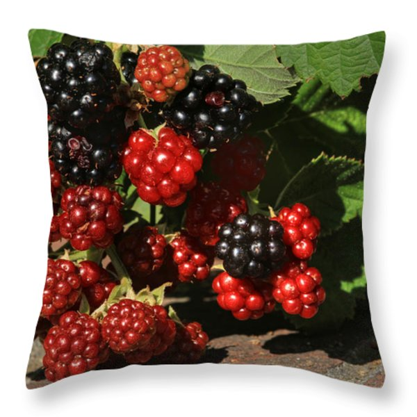 Summer's Bounty Throw Pillow by Donna Kennedy