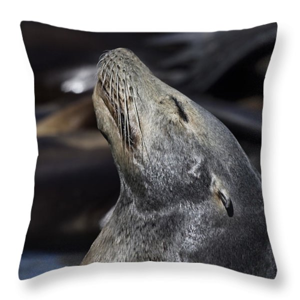 Sun Soaker V2 Throw Pillow by Douglas Barnard