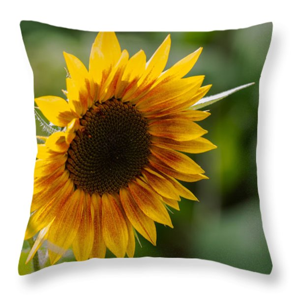 Sunflower Throw Pillow by Andreas Levi