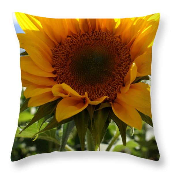 Sunflower Highlight Throw Pillow by Kerri Mortenson