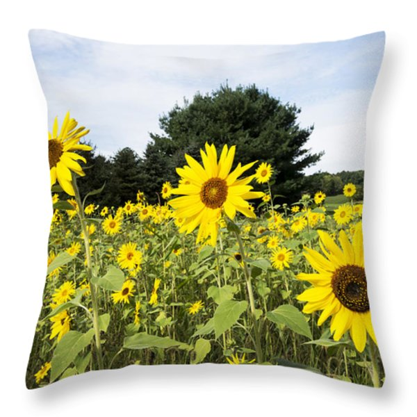 Sunflower Patch Throw Pillow by Ray Summers Photography