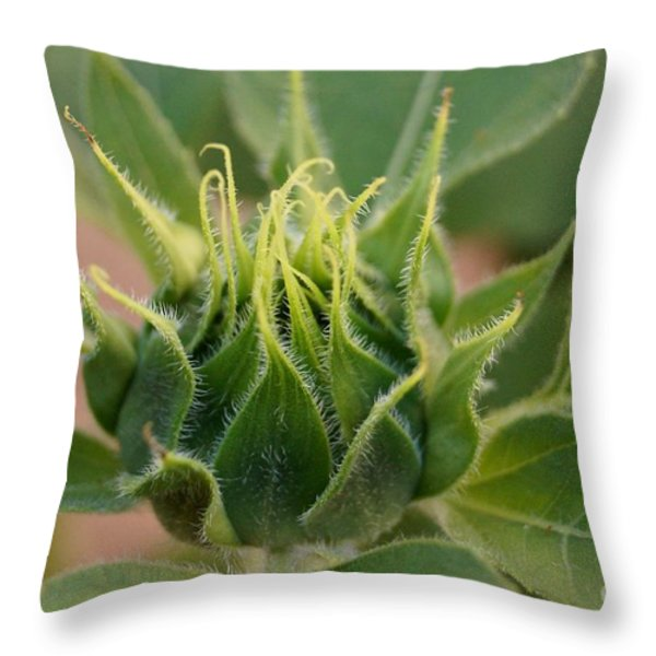 Sunflower Pod Throw Pillow by Kerri Mortenson