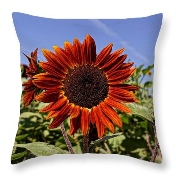 Sunflower Sky Throw Pillow by Kerri Mortenson