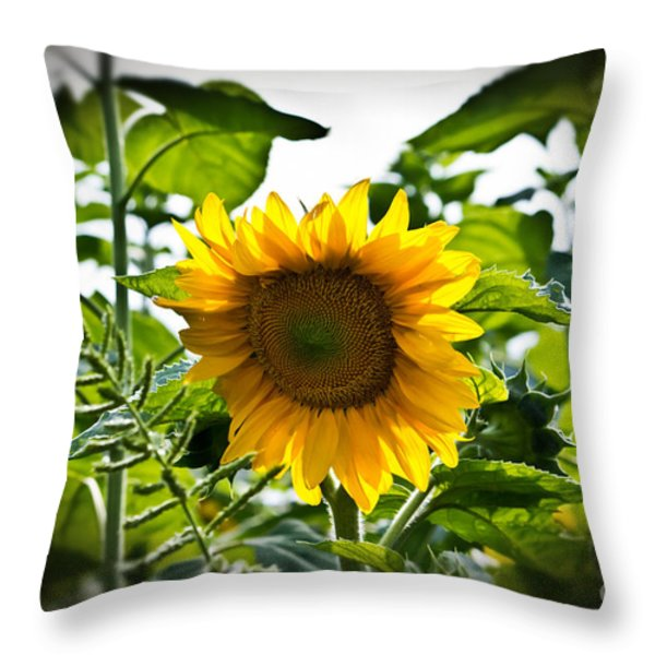 Sunflower Vignette Edges Throw Pillow by Ms Judi