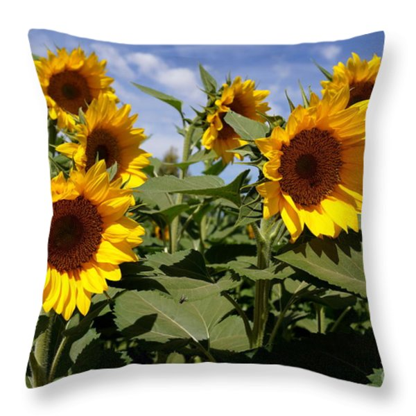 Sunflowers Throw Pillow by Kerri Mortenson