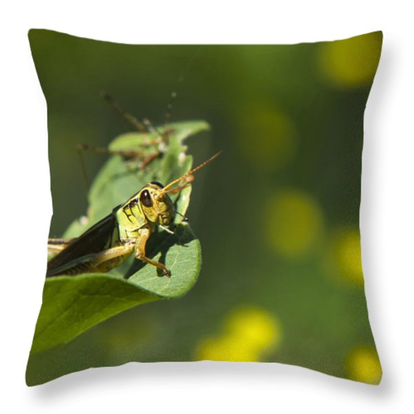 Sunny Green Grasshopper Throw Pillow by Christina Rollo