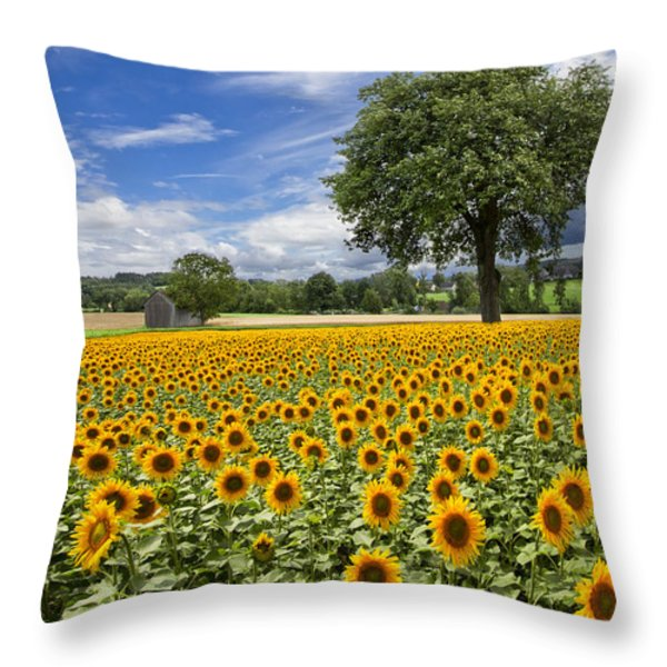 Sunny Sunflowers Throw Pillow by Debra and Dave Vanderlaan