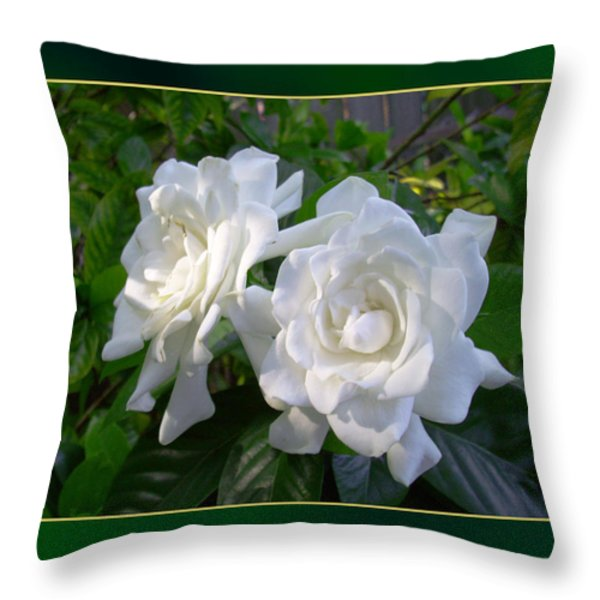 Sweet Gardenia Throw Pillow by Ginny Schmidt
