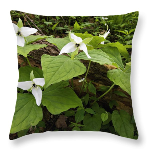 Sweet White Trillium - D003800 Throw Pillow by Daniel Dempster