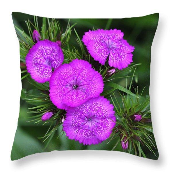 Sweet William Throw Pillow by J Scott Davidson