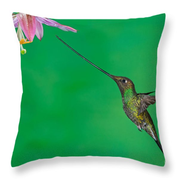 Sword-billed Hummer Throw Pillow by Anthony Mercieca