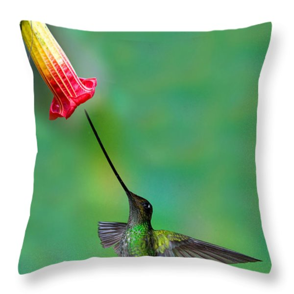 Sword-billed Hummingbird Throw Pillow by Anthony Mercieca