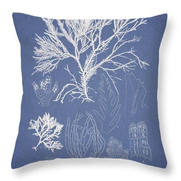 Symphocladia gracilis  Throw Pillow by Aged Pixel
