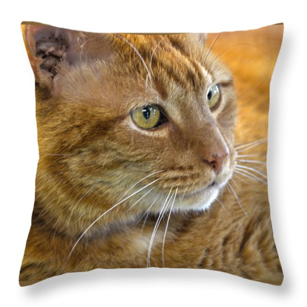 Tabby Cat Portrait Throw Pillow by Sandi OReilly