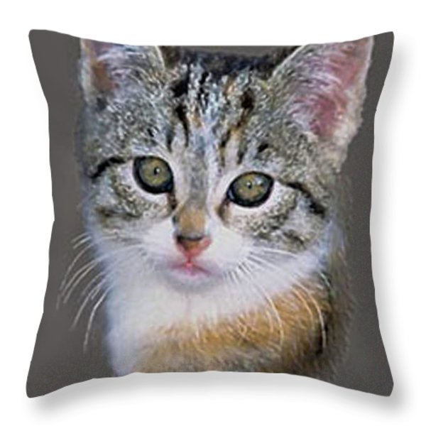 Tabby  Kitten Throw Pillow by  Bob and Nadine Johnston