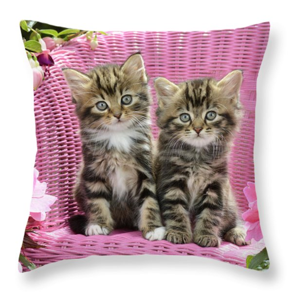 Tabby Kittens Throw Pillow by Greg Cuddiford