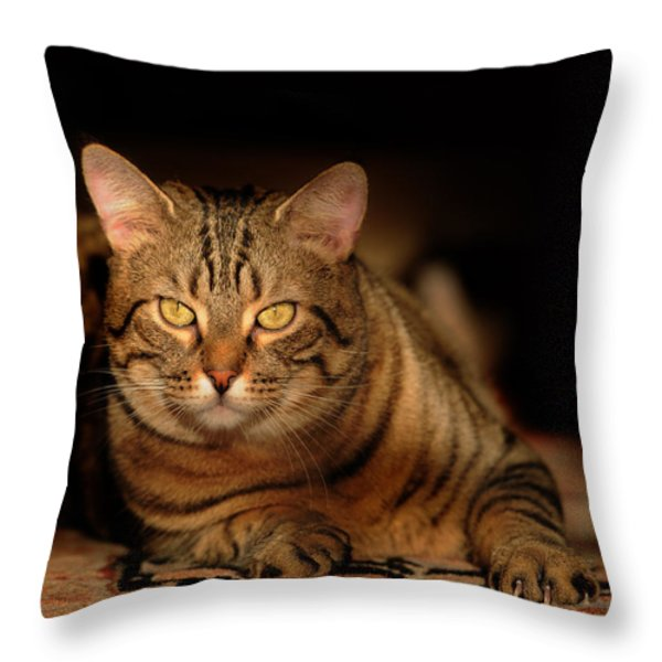 Tabby Tiger Cat Throw Pillow by Renee Forth-Fukumoto