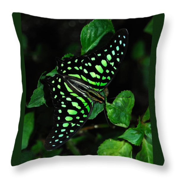 Tailed Jay Butterfly Throw Pillow by Eva Kaufman