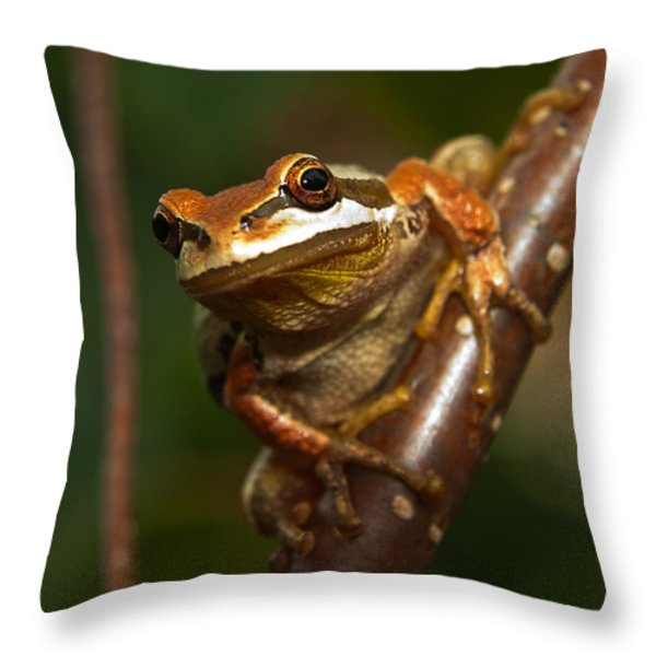 Take the Leap Throw Pillow by Randy Hall