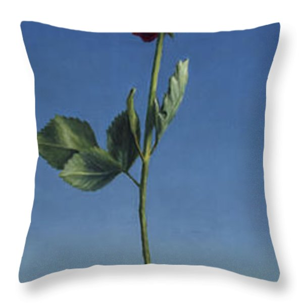 Tenuous Still-Life 1 Throw Pillow by James W Johnson