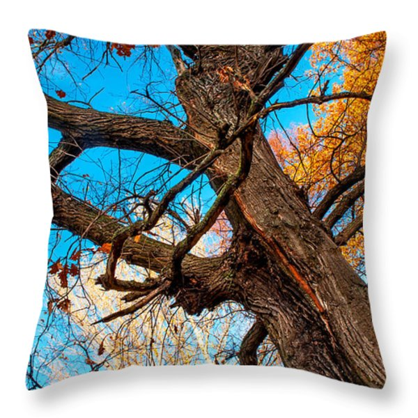 Texture Of The Bark. Old Oak Tree Throw Pillow by Jenny Rainbow