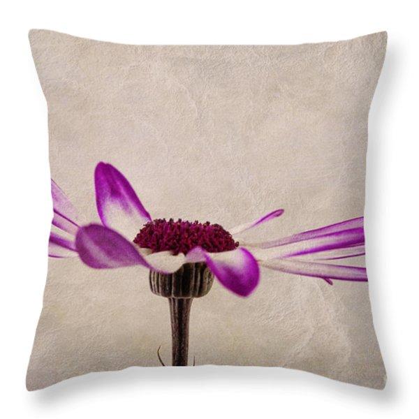 Texturised Senetti pericallis Throw Pillow by John Edwards