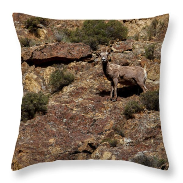 The Bighorn Uwe Throw Pillow by Robert Bales