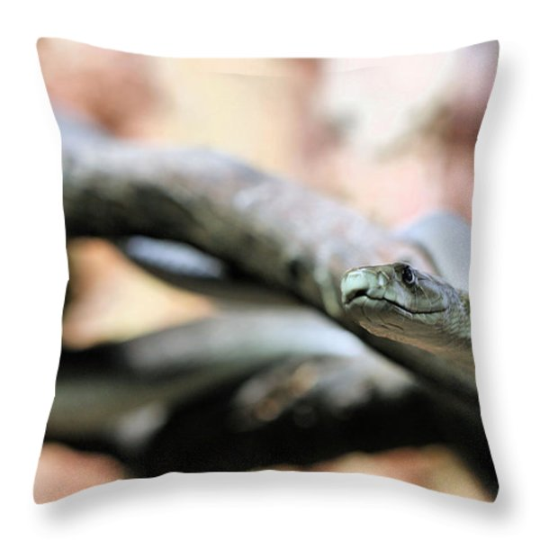 The Black Mamba Throw Pillow by JC Findley